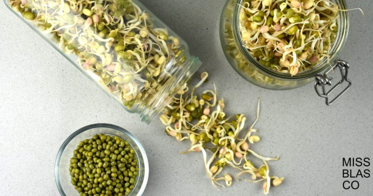 How to sprout mung bean at home